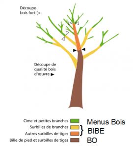 Visuel Etude Biomasse